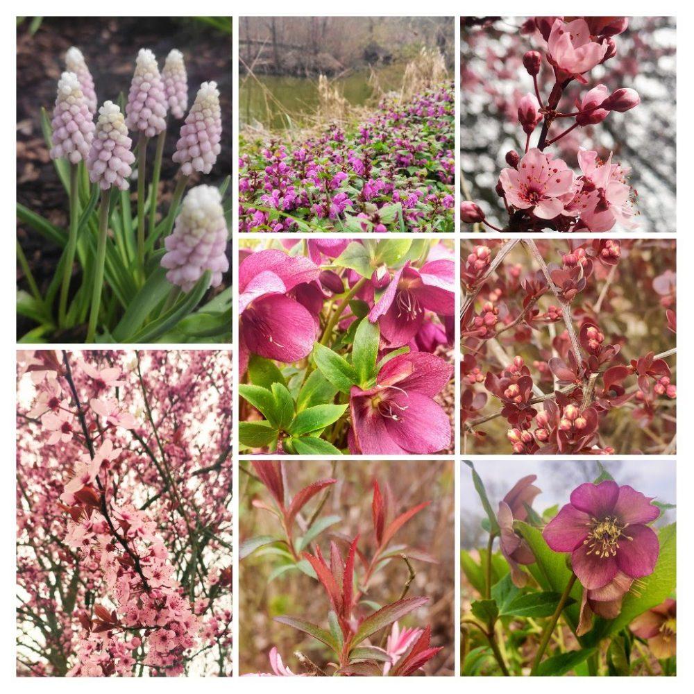 aktuelle Corona Richtlinen, Bild von verschiedenen rosa Blumen